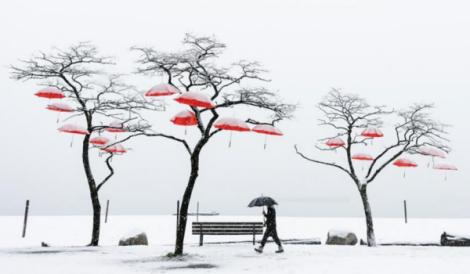 rainblossom-vancouver-umbrella-red