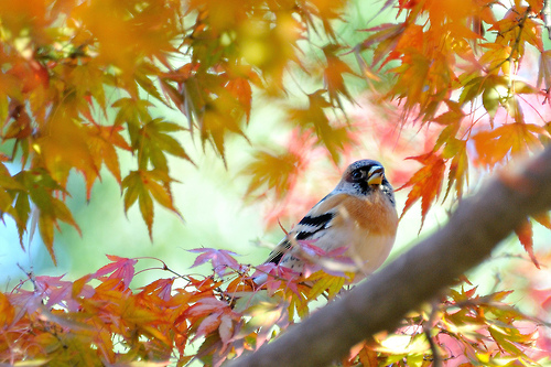 bird-leaves-autumn