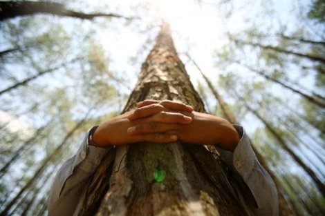 hug-tree